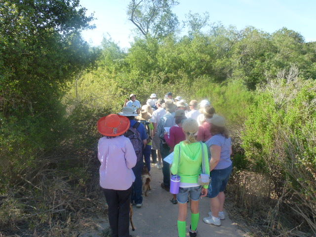Native plant hike (2)