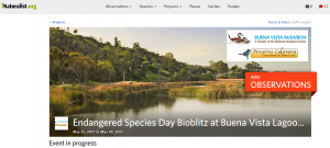 Buena Vista Lagoon bioblitz